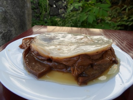 Kombucha SCOBY (culture taken out from the brew)